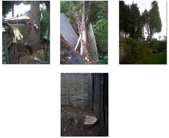 An emergency callout to a Conifer tree which had split in half falling across two gardens and a shed.